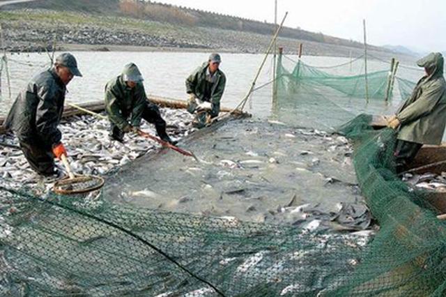合肥渔业去年总产值达168.3亿元,持续领跑全省