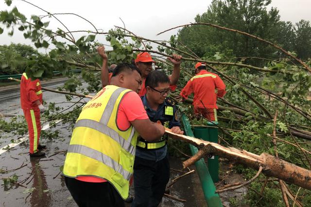 狂风暴雨刮倒行道树 高速路政抢险保畅通