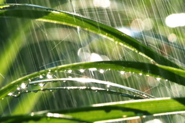 舒爽宜人正是初夏最好时 宜城今日中雨最高气温24℃