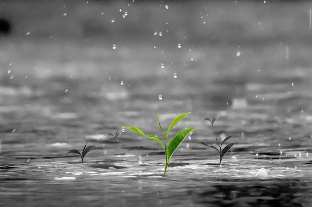安徽江南地区昨入梅 未来一周雨水在皖走南闯北