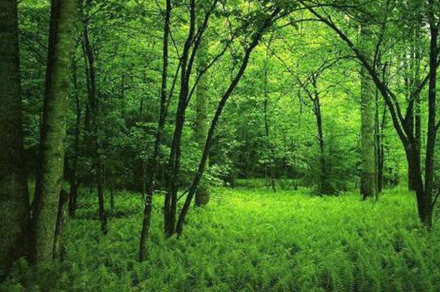 阜阳市将基本实现四级林长体系全覆盖