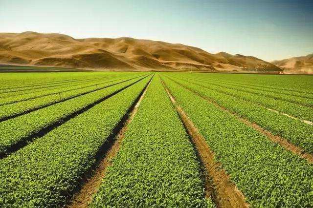 安徽省现代农业发展中心公开招收6名博士后研究人员