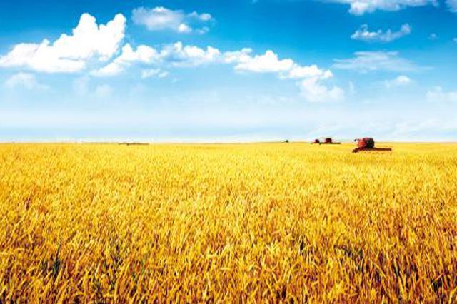 宿州农业产业化联合体效应凸显