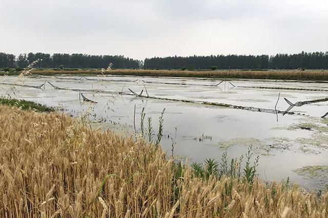 合肥市今年虾稻产业年销售额将突破60亿元