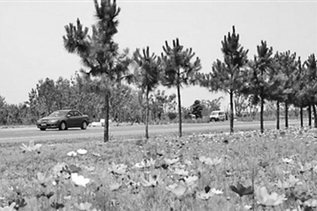 巢湖半岛最美绿道通过竣工验收