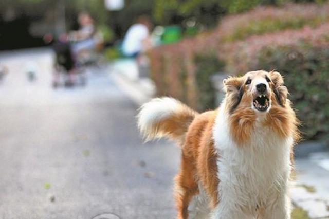 这些养狗行为不文明 请您别做了