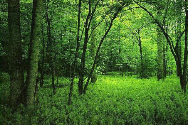 宜秀区三级林长体系全面建成