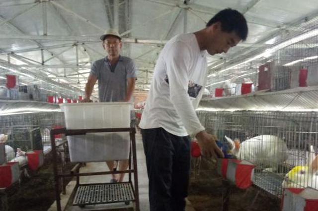 罗文辉:从10只兔子开始的独臂养兔人