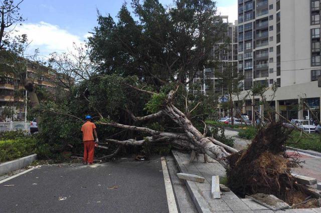 """台风""""温比亚""""造成安徽八市受灾 各地全力抗御强风雨"""