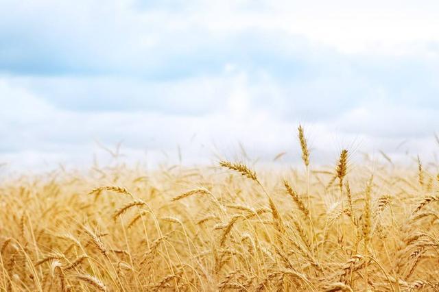 2018年安徽夏粮总产下降
