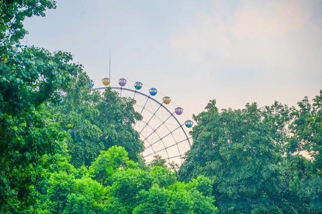 合肥人有一种童年 叫杏花公园