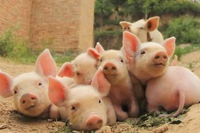 阜阳市未发现非洲猪瘟可疑疫情