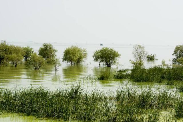 安徽湿地日:加强保护 提升湿地修复能力
