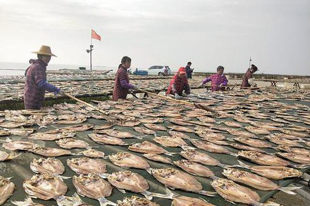 巢湖渔民冬季晒鱼忙
