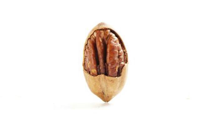 合肥人将能吃到更多本地产碧根果
