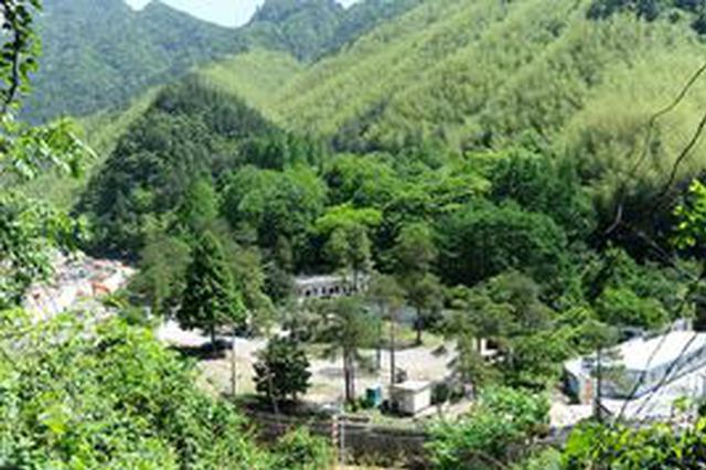 黄山区破获重大滥伐林木案