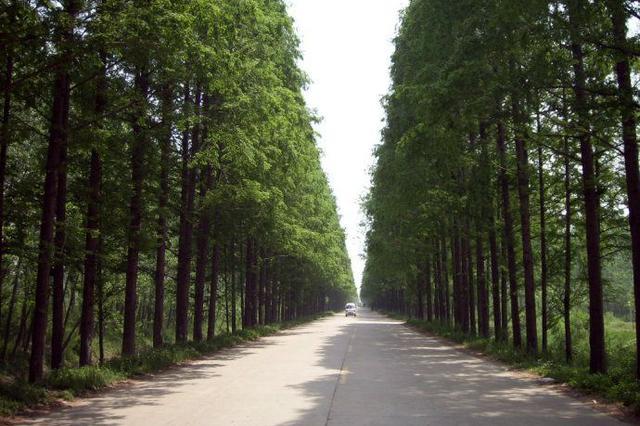 合肥市首次拟命名百余条林荫路