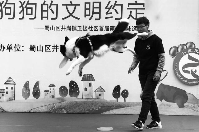 """""""萌宠趣味运动会"""" 文明养犬有""""约定"""""""