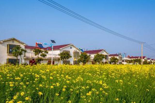 肥东县石塘镇:重点工程建设提质增速