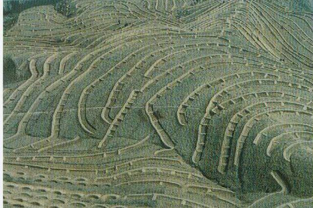 合肥已完成造林整地4.83万亩 多县超额完成年度任务