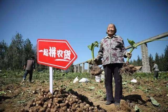 滁州市完善服务体系 电商为乡村振兴添翼
