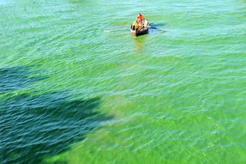 2020年 巢湖蓝藻水华现象将得到初步遏制