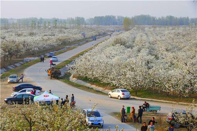 砀山县入选中国特色农产品优势区