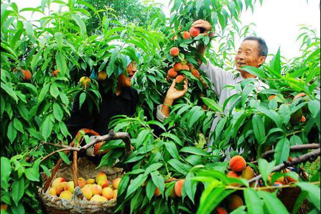 滁州全椒培育龙头企业加快农业产业化发展