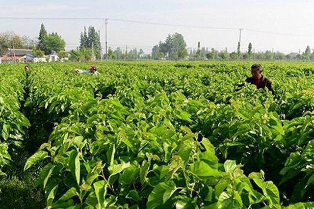 阜阳14家农业产业化联合体跻身省示范
