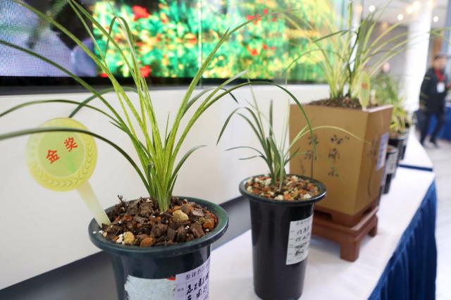 安徽省第十五届兰花博览会在合肥开幕