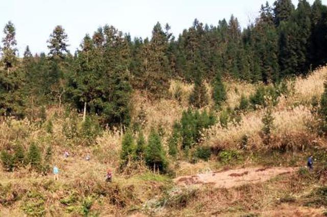 凤阳4岁女童遭继父暴打致死 被埋荒山