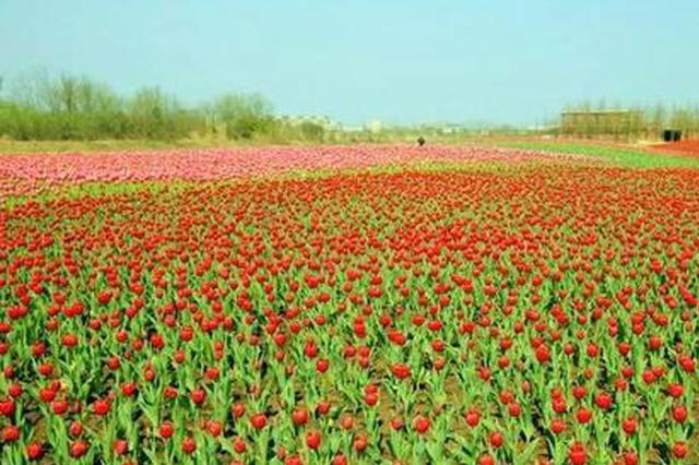 安徽芜湖:六郎花海如画  踏春赏花正当时
