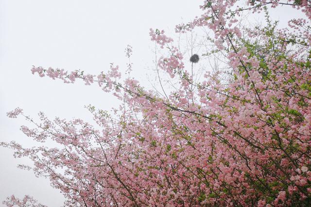 满城春色关不住 合肥赏花进行时