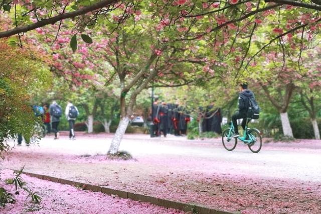 合肥:林花飞舞落草甸 为迎春风携雨来