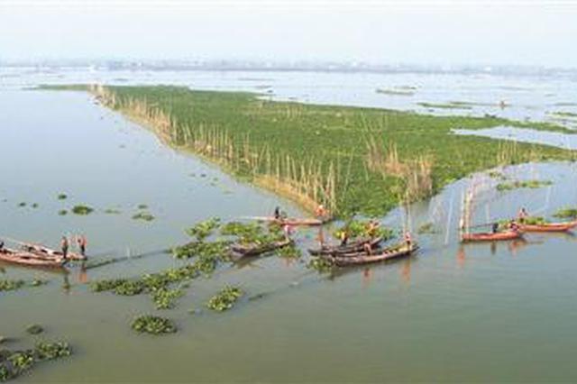 安庆拆除99.4万亩湖泊湿地围拦网 为安徽省最多