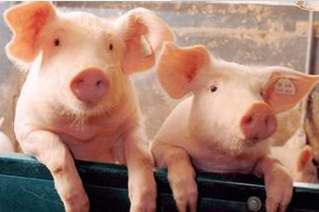 本周安徽生猪和猪肉价格略有下降
