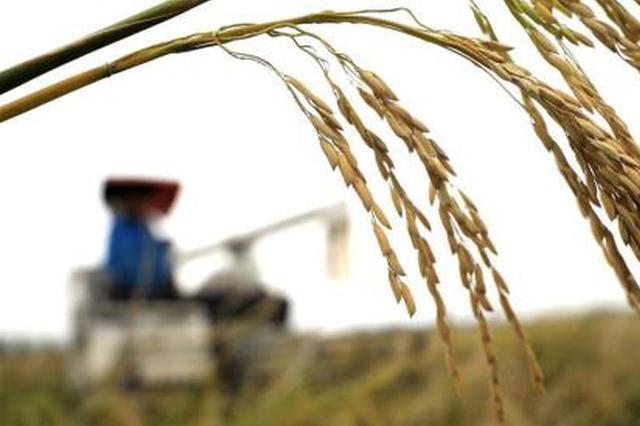 今年我国粮食生产预计保持稳定 部分农产品价格波动大