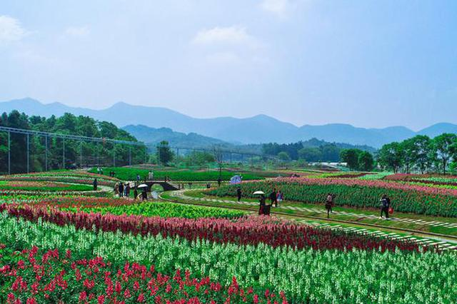 安徽铜陵:游客赏花过假期