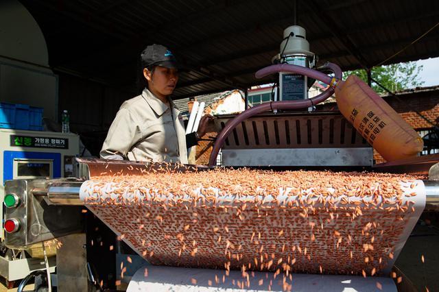安徽五河:扶贫新技术 播种新希望