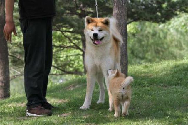 池州出台犬类新规:犬只咬伤他人 主人最高被罚2万