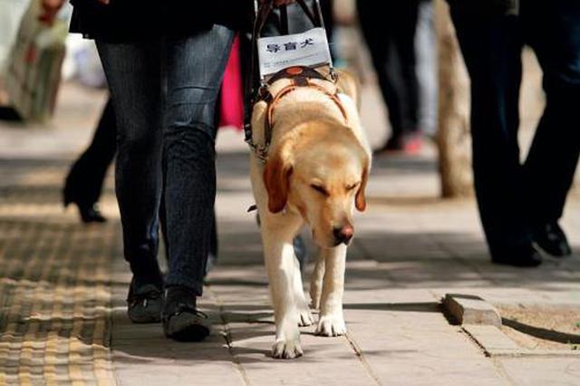 合肥首只导盲犬遇麻烦 坐公交打出租遭遇拒载