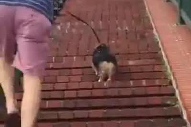 合肥首只导盲犬遭拒载