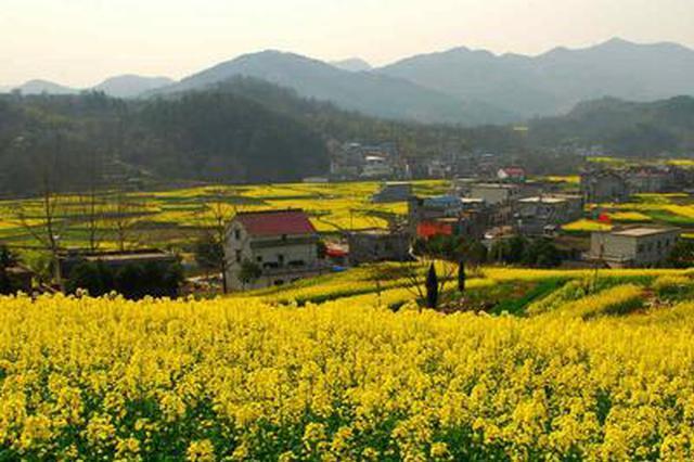 安庆市147万亩油菜丰收 亩产增长约7% 总产增加3万吨