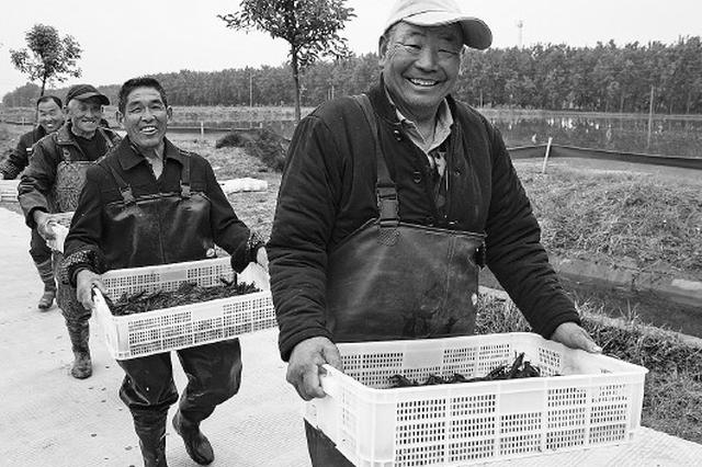 """""""稻虾共养"""":助力农民增收"""