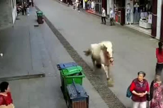 安徽歙县一白马受惊 街道冲撞路人