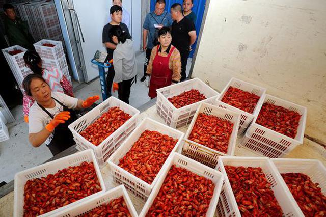 全椒:稻田小龙虾打造国家地理标志 助力农民致富