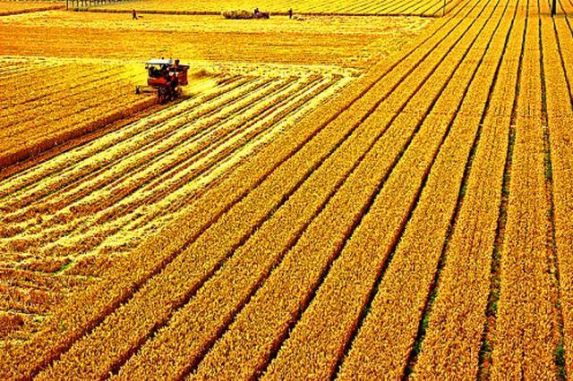 安徽夏种进度过六成 完成夏种4112.45万亩