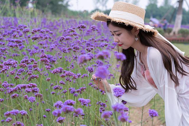合肥:紫色花海如梦似幻