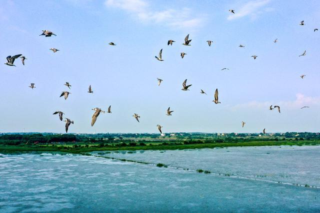 合肥:退渔还湖生态美 碧水蓝天任鸟飞
