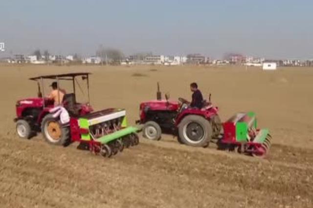 安徽省玉米种植面积回升  新品种推广加速